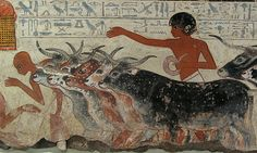 Nebamun's cattle are driven up for his inspection while scribes tally their numbers - detail.  From the wall paintings of the tomb of Nebamun, a wealthy accountant in the Temple of Amun at Thebes circa 1350BC.  British Museum, London.
