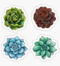Succulent Sticker Set Sticker