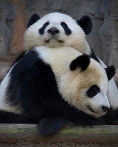 Image: Facebook/Zoo Atlanta