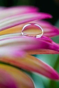 Gota de lluvia encima de una flor bonita | Raindrop atop a pretty flower