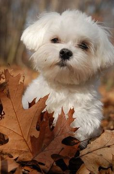Your character finds this puppy playing in the leaves. What kind of adventure do they embark? #WritingPrompt #WritersRelief