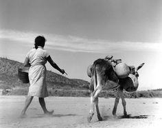 Región ixtlera del norte de México, 1965 Photo by Rodrigo Moya