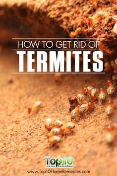 How to Get Rid of #Termites
