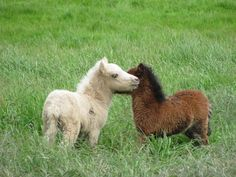 Oh! Tiny horse babies! Squuueeee