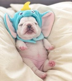 French bulldog blue, french bulldog puppies, blue frenchie, animales gif, s Cute Baby Dogs, Cute Dogs And Puppies, Cute Babies, Doggies, Baby Pugs, Adorable Dogs, Baby Baby, Baby Animals Pictures, Cute Animal Pictures