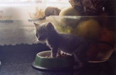Have you ever seen a more adorable kitten?