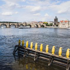"Gefällt 127 Mal, 3 Kommentare - Daniel Laqua (@daniel_laqua) auf Instagram: ""Penguin walk and view at Charles Bridge -- Throwback 07/2016 . . . . #czech #czechrepublic…"""