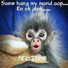 Soms hang my mond oop. Witty Quotes Humor, Cute Quotes, Best Quotes, Funny Quotes, Nice Sayings, Qoutes, Good Day Wishes, Lekker Dag, Magic Day