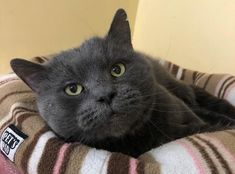 Hi there I'm Vincent!I came into the RSPCA care with a lot of my friends, the one mate I've stayed close to is Graham who is also up for rehoming. Dogs And Kids, White Cats, Go Outside, Dog Cat, How Are You Feeling, Blue And White, Pets, Animals, Animales