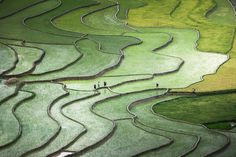 Terrace paddies in North Vietnam Photo by Quỳnh Anh Nguyen - 2015 National Geographic Photo Contest
