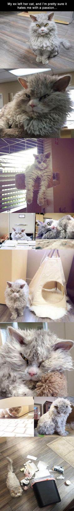 Lustige Tier Memes des Tages – 32 Bilder – Lovely Animals World … - Tiere Malen Funny Animal Memes, Funny Animal Pictures, Cat Memes, Funny Animals, Cute Animals, Funny Memes, Memes Humor, Funniest Memes, Grumpy Cat