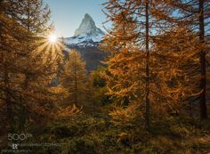 Framed in Gold by lolloriva. Please Like http://fb.me/go4photos and Follow @go4fotos Thank You. :-)