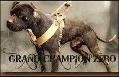 Black Pitbull, Black Dogs, Pit Dog, Dog Corner, American Pitbull, Dog Games, Dog Fighting, Bull Terrier Dog, Dog Training