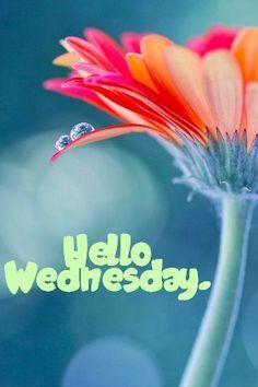 Hello Wednesday!