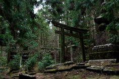 toriis   Toriis y tumbas en el cementerio de Okunoin, Koya-san, Japón   El ...