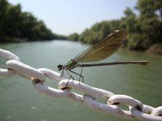 Dragonfly by Angelescu Stelian on 500px