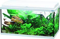 Offrez de l'espace à vos poissons grâce a cet Aquarium Aquadream de 90 litres. Il mettra en valeur votre intérieur, à n'en pas douter !