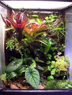 18x18x24 terrarium, love this composition