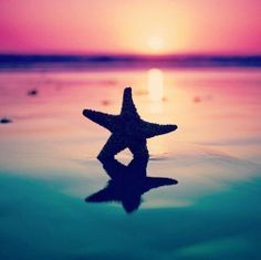 Starfish  #SummerInspiration #spon