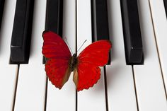 Red Butterfly On Piano Keys Photograph  - Red Butterfly On Piano Keys Fine Art Print