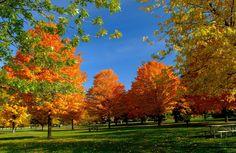 Резултат с изображение за времена года картинки осень