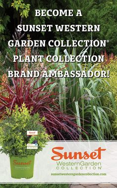 Brand Ambador Westerns Western Find This Pin And More On Sunset Garden Collection