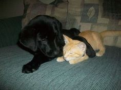 A puppy and a kitty!!