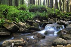 Come to the Smokies and soak up all the beauty!!!