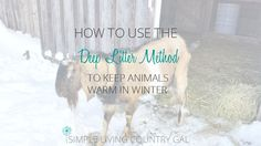 The deep litter method is a great way to keep your animals warm in frigid temperatures. Great for chickens too!