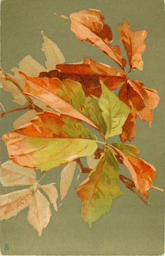 VIGNE VIERGE  leaves Watercolor Leaves, Watercolor And Ink, Autumn Art, Autumn Leaves, China Painting, Painting Trees, Catherine Klein, Virginia Creeper, Autumn Photography
