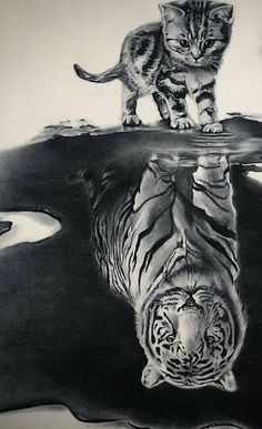 The Cat with the hart of a Tiger. Domestic and Wild Animal drawings and paintings. By Ivan Hoo. Cute Little Animals, Cute Funny Animals, Cute Cats, Adorable Kittens, Cute Cat Wallpaper, Animal Wallpaper, Kitten Images, Baby Animals Pictures, Tiger Art