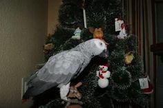 Concurso Loromania Navidad 2012