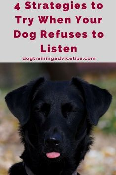 Dog Training for Dummies - CLICK THE PICTURE for Lots of Dog Obedience and Care Ideas. #doglovers #dogobediencetraining