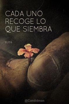 """""""Cada uno recoge lo que siembra"""". #Buda #Citas #Frases @candidman"""