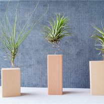 Rural Style-- Wood Made Home Decor,Gift for her/him This Wood Stand do not include Airplant. Small: Large: - Online Store Powered by Storenvy