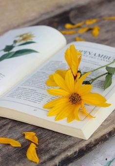 It's a beautiful world! Book Aesthetic, Flower Aesthetic, Aesthetic Pictures, Book Photography, Creative Photography, Yellow Aesthetic Pastel, Book Flowers, Sun Flowers, Yellow Theme