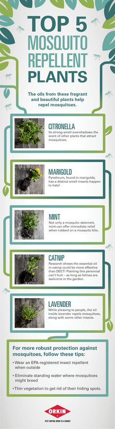 Top 5 #Mosquito Repellent Plants