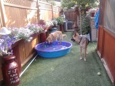 joan r picture  Perfect Turf for dog runs