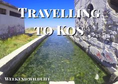 Find out what it's like to visit Kos. Sulphur Springs, Working Holidays, Sandy Beaches, Greek Islands, Beautiful Islands, Beautiful Landscapes, The Locals, Kos, Travelling