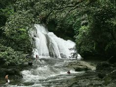 """15 meters high and a width of 20 meters provides a large area for visitors to enjoy the cool water flow. Around the waterfall, there are puddles of commonly used stream of visitors as a place to swim. Besides enjoying the beauty of the waterfall, visitors to the """"National Park Bantimurung"""" Maros, South Sulawesi, also can visit the famous caves with stalactites Dreams nodes. Bantimurung also known as the """"Kingdom of Butterflies"""" because this park is the habitat for thousands of butterfli"""