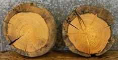 $94.95  - 2 Very Rustic Live Edge Round Cut Pine Centerpiece Slabs T 2 14 D 15 14  69196920 -- More info could be found at the image url. (This is an affiliate link) #BuildingSupplies