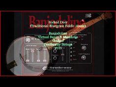 Forked Deer (Trad. Bluegrass Fiddle) Banjodoline Virtual Banjo & Mandolin  #ForkedDeer #BluegrassMusic #FiddleMusic #Syntheway #Virtual #Banjo #Mandolin #Banjodoline #Mandoline #Banjolin #Banjourine #Mandolone #Mandocello #Mandobass #AltMandolin #Mandolino #Cumbus #OctaveMandolin #Folk #CountryMusic #Bluegrass #AppalachianMusic #ElectricMandolin #ElectricBanjo #Tremolo #VSTi #VST #MIDI #Bouzouki #Balalaika #FLStudio #VirtualBanjo #VirtualMandolin #BanjoVST #MandolinVST