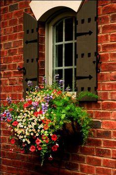 Showcase of Seasonal Windowboxes | Wow Windowboxes