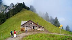 Höhenwanderung über die Scheidegg zum Urmiberg   wanderungen.ch