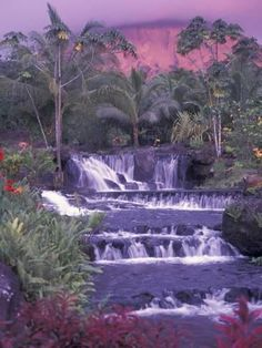 Tabacon Hot Springs, Arenal Volcano, Costa Rica Photographic Print by Nik Wheeler at AllPosters.com