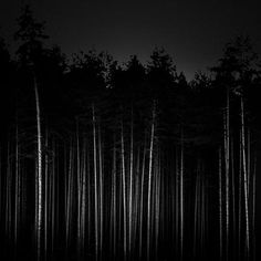 Sans titre is a creation by Israel Guerrero. Category Nature, Vegetal, Tree, forest, Fine-Art, Photography, Digital. Estonia, 2010. Something from the archive.…
