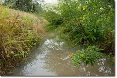 A Guide to Back-Flood Swales - The Permaculture Research Institute