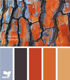 the colors I like for my bedroom. my bedding is the lightest blue, thinking about doing the walls the lightest orange and using the middle colors as accents.