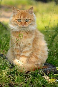 "Cat Model ""Mimi"""