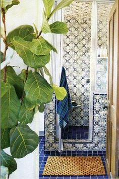 Fiddle fig houseplant and moroccan tiled shower in a bathroom